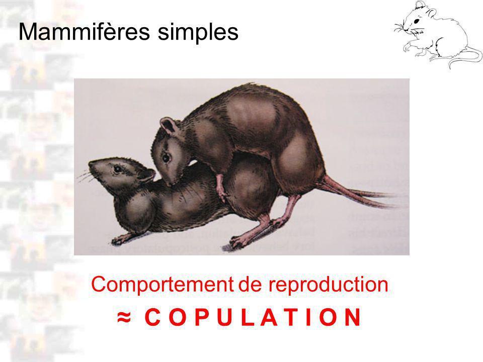 Comportement de reproduction C O P U L A T I O N Mammifères simples D8 : Modèles : Mammifères 1 : Comportement 1