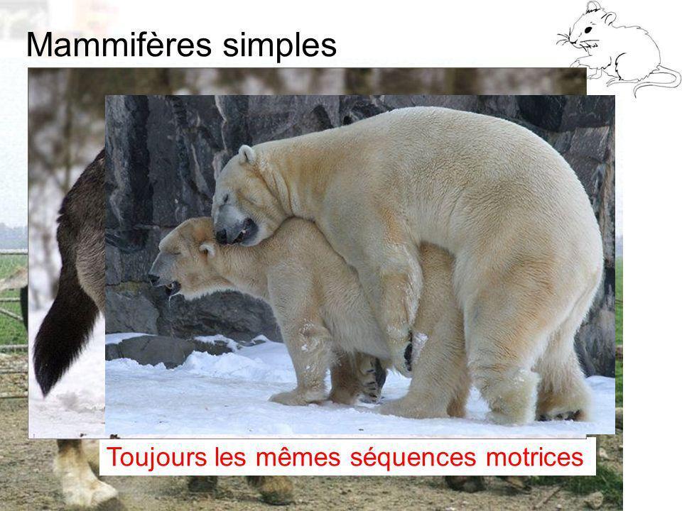 Mammifères simples D9 : Modèles : Mammifères 2 : Comportement 2 Toujours les mêmes séquences motrices