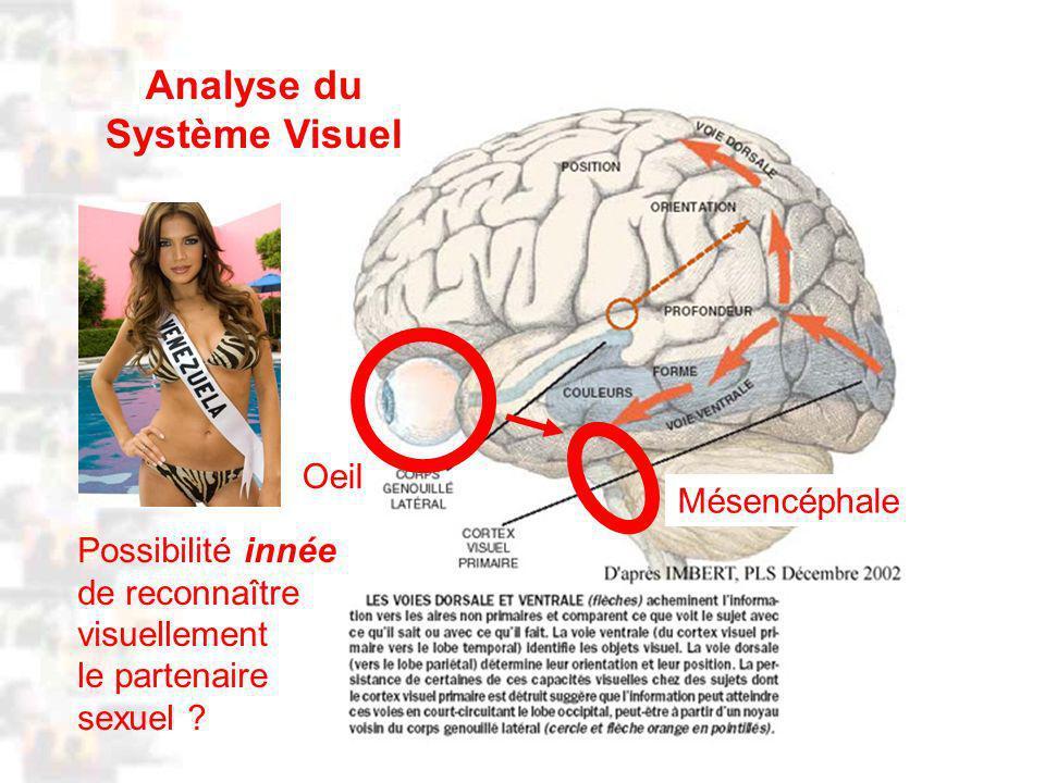 D91 : Psychobiologie : Cognition 2 Oeil Mésencéphale Analyse du Système Visuel Possibilité innée de reconnaître visuellement le partenaire sexuel ?