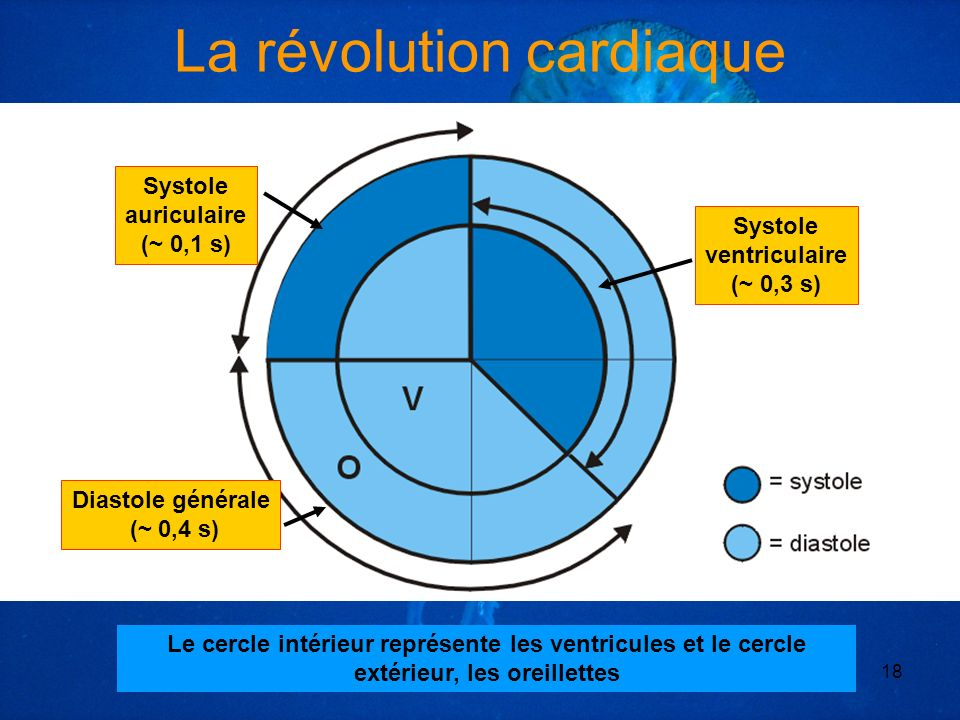 *** Yohann MOITHEY MF2 186818 Systole auriculaire (~ 0,1 s) Diastole générale (~ 0,4 s) Le cercle intérieur représente les ventricules et le cercle ex