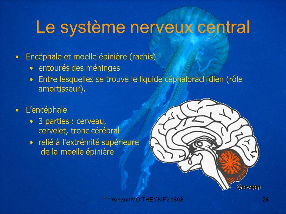 *** Yohann MOITHEY MF2 186828 Le système nerveux central Encéphale et moelle épinière (rachis) entourés des méninges Entre lesquelles se trouve le liq