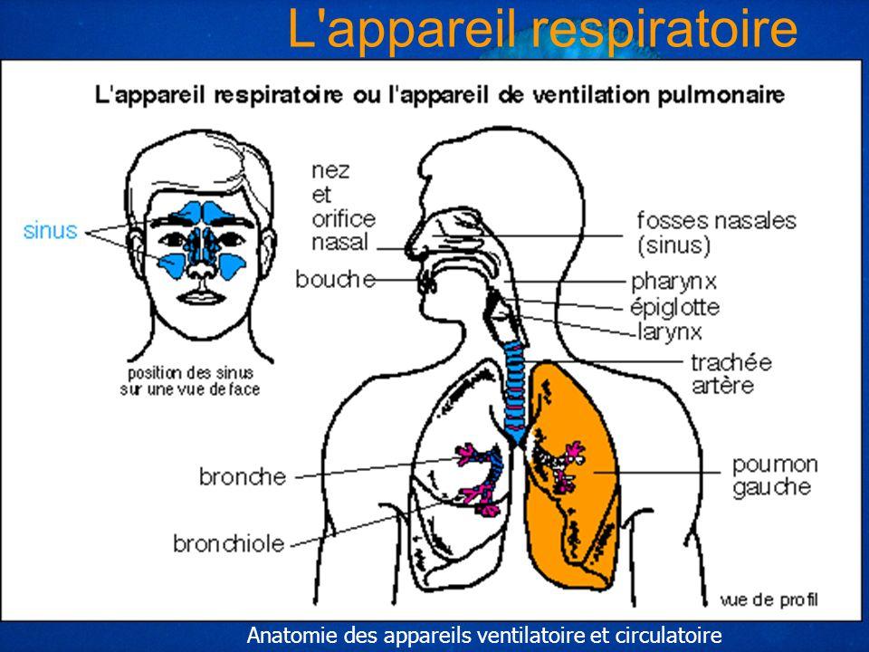 *** Yohann MOITHEY MF2 18689 L'appareil respiratoire Anatomie des appareils ventilatoire et circulatoire