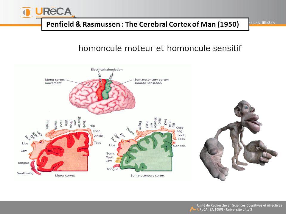 Penfield & Rasmussen : The Cerebral Cortex of Man (1950) homoncule moteur et homoncule sensitif