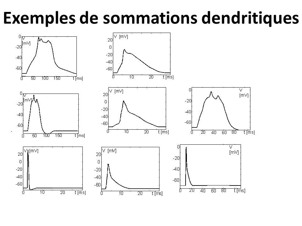 Exemples de sommations dendritiques