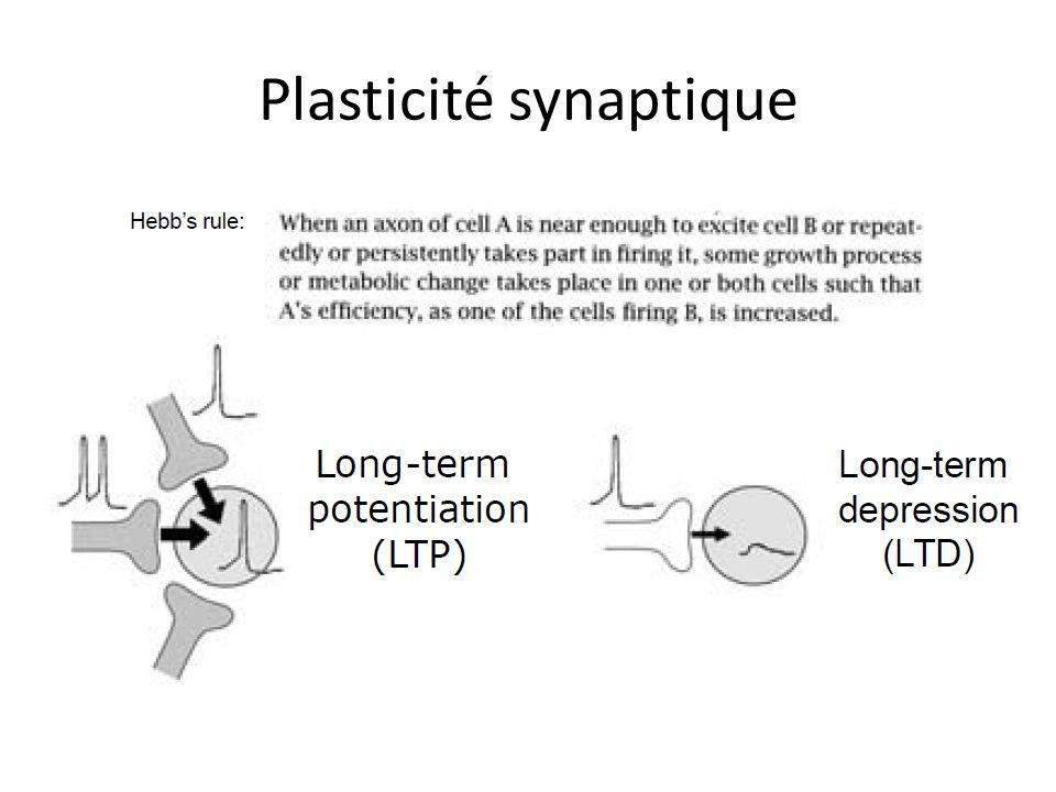 Plasticité synaptique