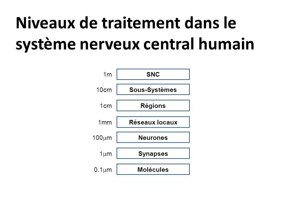 Niveaux de traitement dans le système nerveux central humain Molécules 0.1 m Synapses 1 m Neurones 100 m Réseaux locaux 1mm Régions 1cm Sous-Systèmes