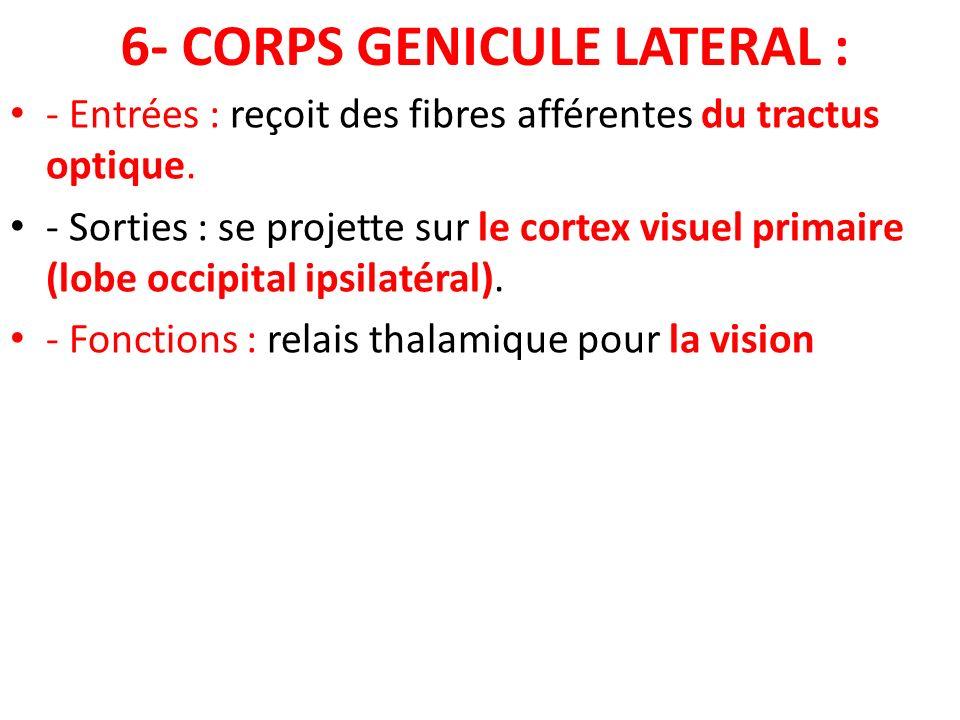 6- CORPS GENICULE LATERAL : - Entrées : reçoit des fibres afférentes du tractus optique. - Sorties : se projette sur le cortex visuel primaire (lobe o