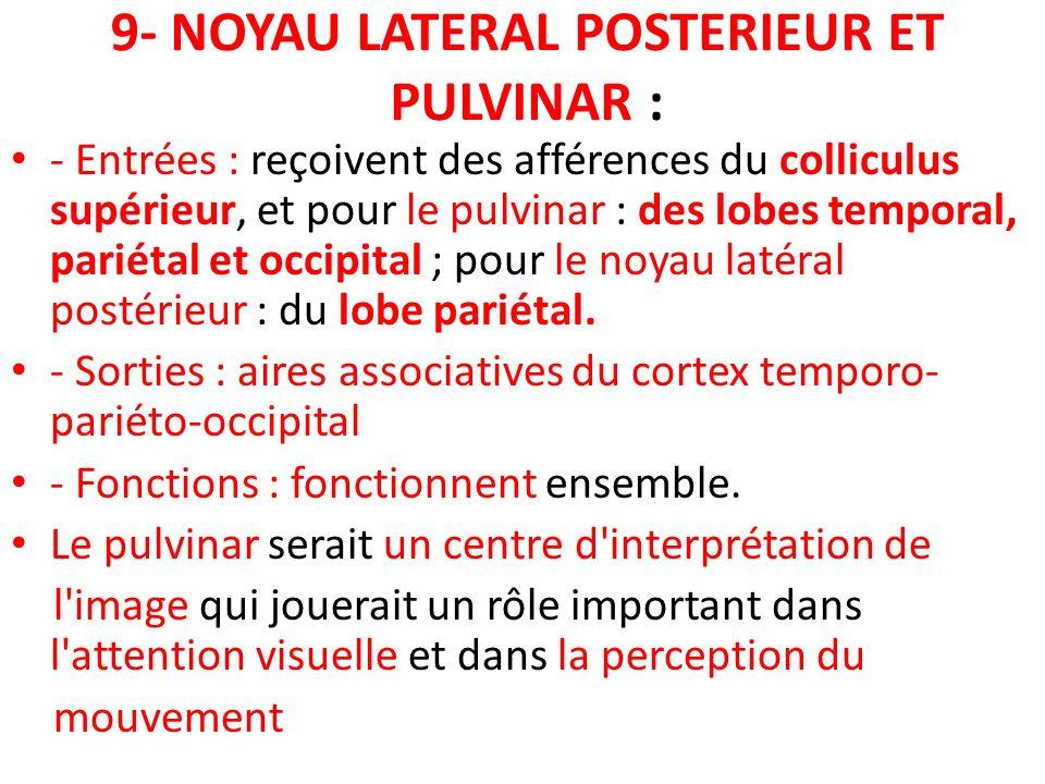 9- NOYAU LATERAL POSTERIEUR ET PULVINAR : - Entrées : reçoivent des afférences du colliculus supérieur, et pour le pulvinar : des lobes temporal, pari
