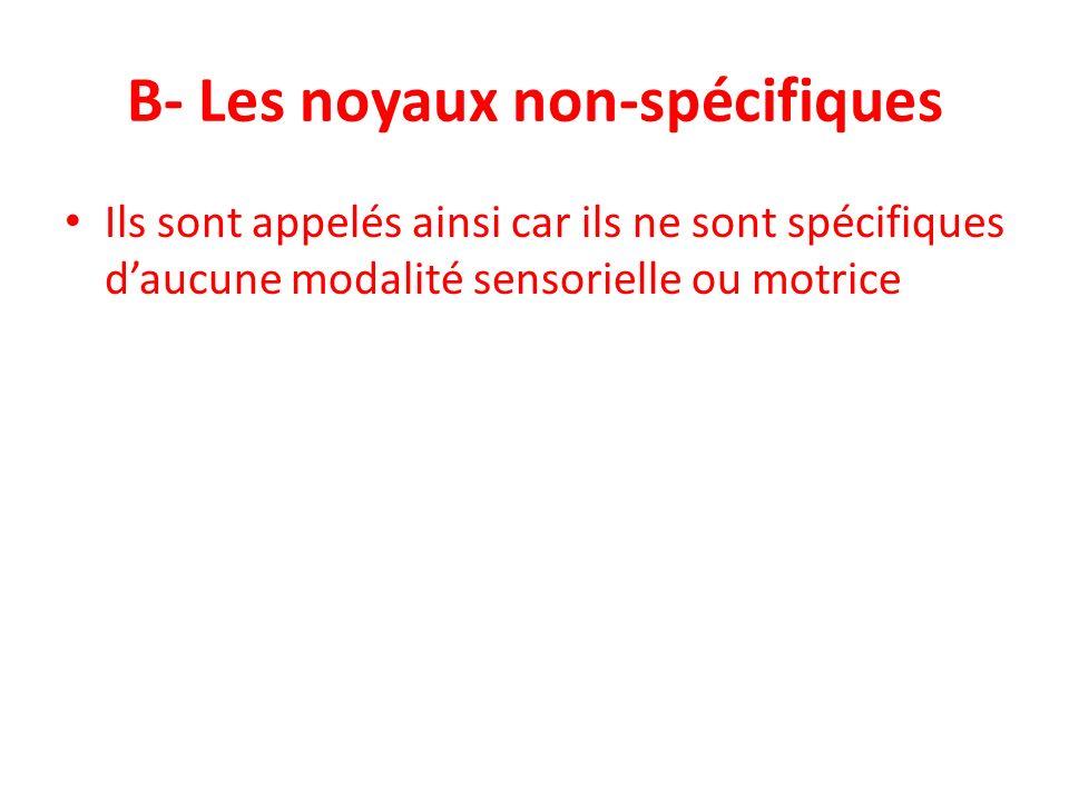 B- Les noyaux non-spécifiques Ils sont appelés ainsi car ils ne sont spécifiques daucune modalité sensorielle ou motrice
