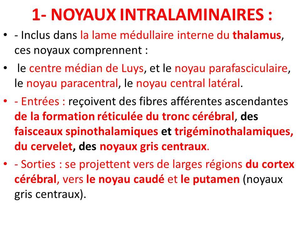 1- NOYAUX INTRALAMINAIRES : - Inclus dans la lame médullaire interne du thalamus, ces noyaux comprennent : le centre médian de Luys, et le noyau paraf