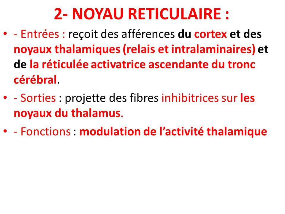 2- NOYAU RETICULAIRE : - Entrées : reçoit des afférences du cortex et des noyaux thalamiques (relais et intralaminaires) et de la réticulée activatric