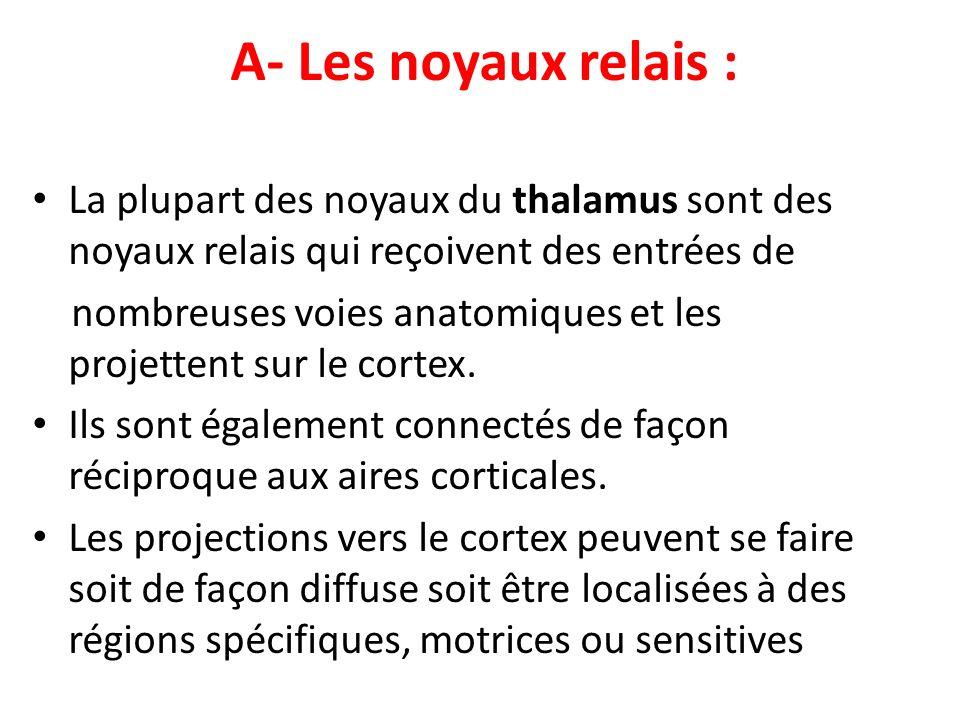 A- Les noyaux relais : La plupart des noyaux du thalamus sont des noyaux relais qui reçoivent des entrées de nombreuses voies anatomiques et les proje