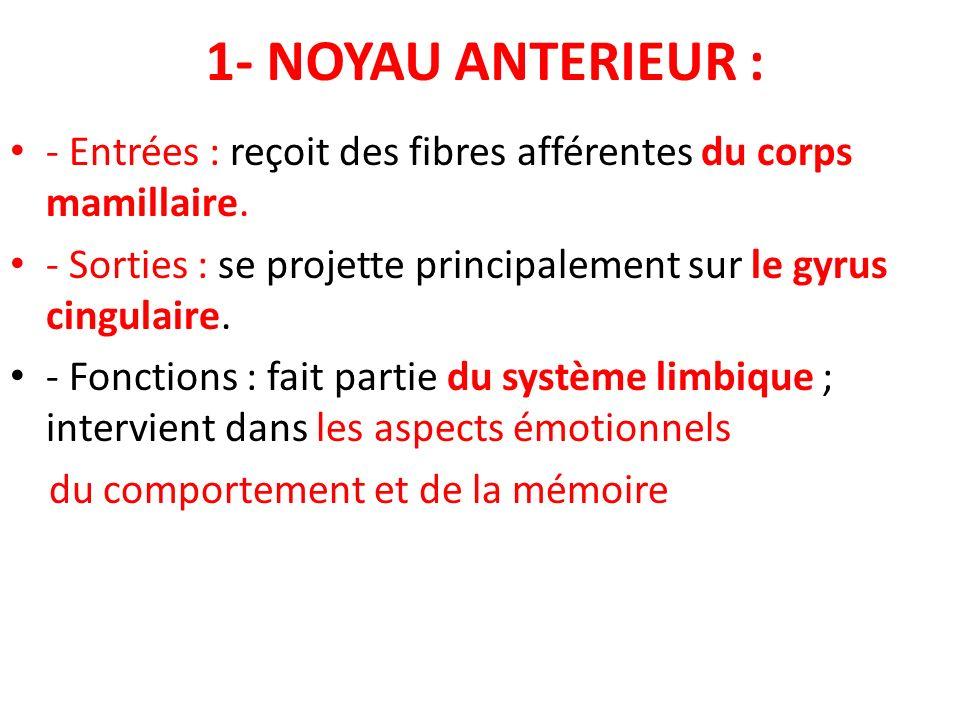 1- NOYAU ANTERIEUR : - Entrées : reçoit des fibres afférentes du corps mamillaire. - Sorties : se projette principalement sur le gyrus cingulaire. - F