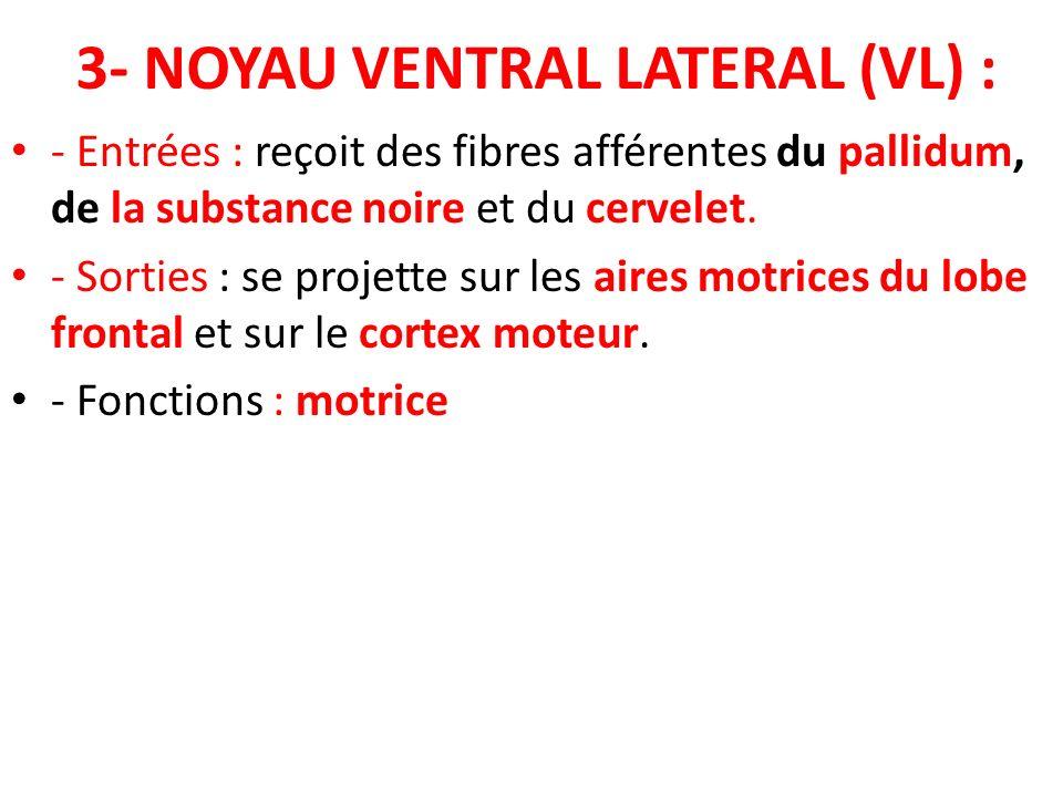 3- NOYAU VENTRAL LATERAL (VL) : - Entrées : reçoit des fibres afférentes du pallidum, de la substance noire et du cervelet. - Sorties : se projette su
