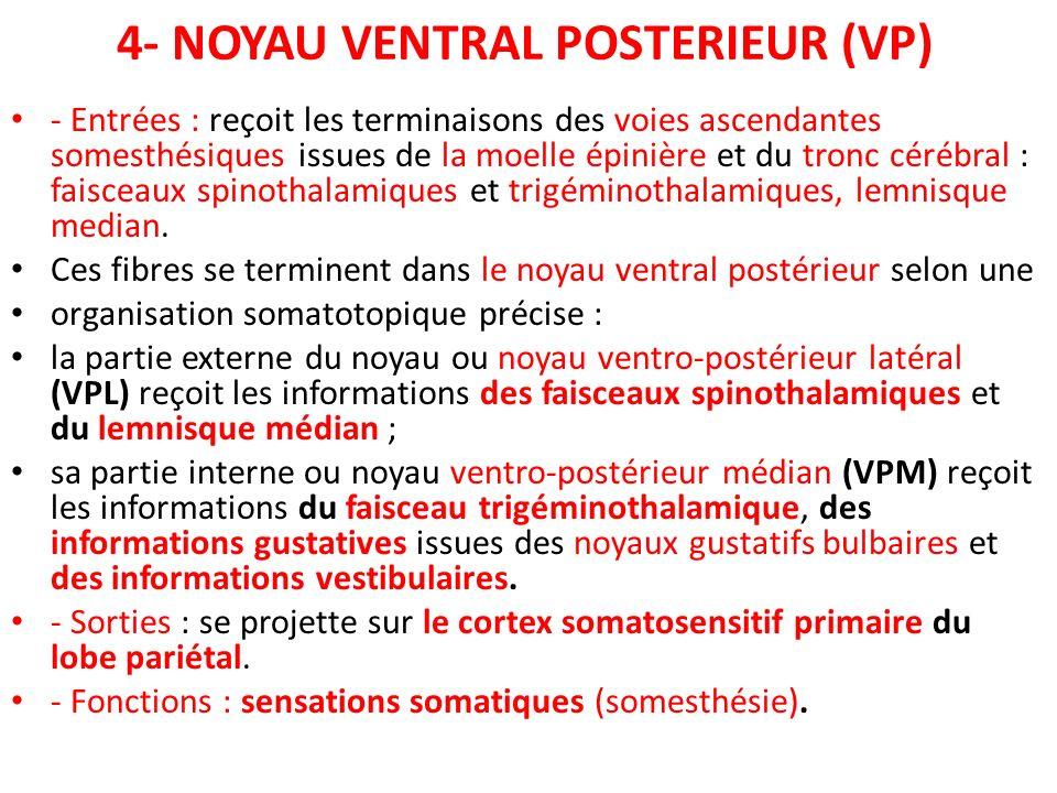 4- NOYAU VENTRAL POSTERIEUR (VP) - Entrées : reçoit les terminaisons des voies ascendantes somesthésiques issues de la moelle épinière et du tronc cér