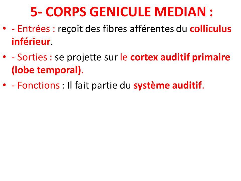 5- CORPS GENICULE MEDIAN : - Entrées : reçoit des fibres afférentes du colliculus inférieur. - Sorties : se projette sur le cortex auditif primaire (l