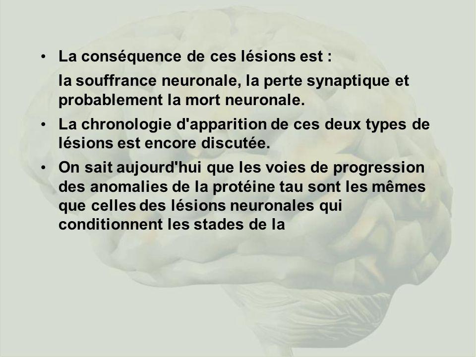 La conséquence de ces lésions est : la souffrance neuronale, la perte synaptique et probablement la mort neuronale.