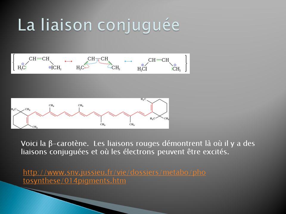 Voici la β-carotène. Les liaisons rouges démontrent là où il y a des liaisons conjuguées et où les électrons peuvent être excités. http://www.snv.juss