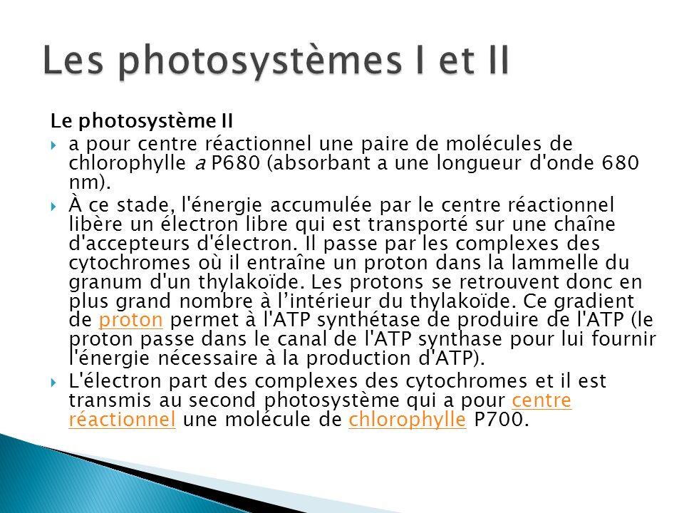 Le photosystème II a pour centre réactionnel une paire de molécules de chlorophylle a P680 (absorbant a une longueur d'onde 680 nm). À ce stade, l'éne