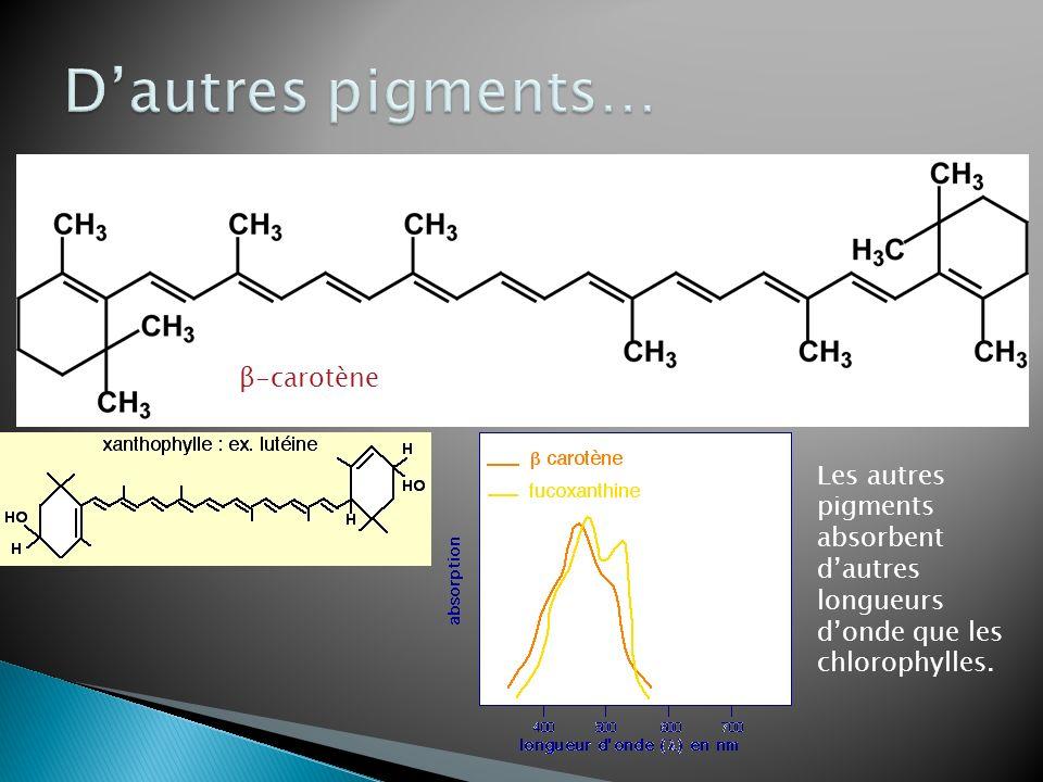 β-carotène Les autres pigments absorbent dautres longueurs donde que les chlorophylles.