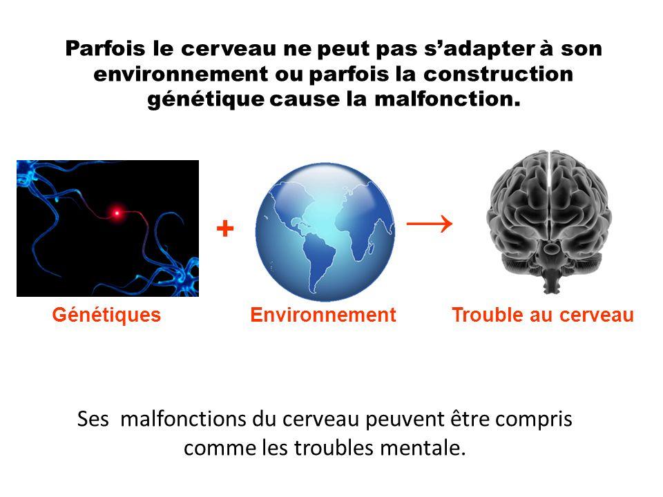 Parfois le cerveau ne peut pas sadapter à son environnement ou parfois la construction génétique cause la malfonction. GénétiquesEnvironnement + Troub