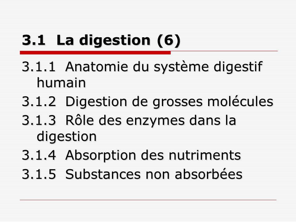 3.1 La digestion (6) 3.1.1 Anatomie du système digestif humain 3.1.2 Digestion de grosses molécules 3.1.3 Rôle des enzymes dans la digestion 3.1.4 Absorption des nutriments 3.1.5 Substances non absorbées