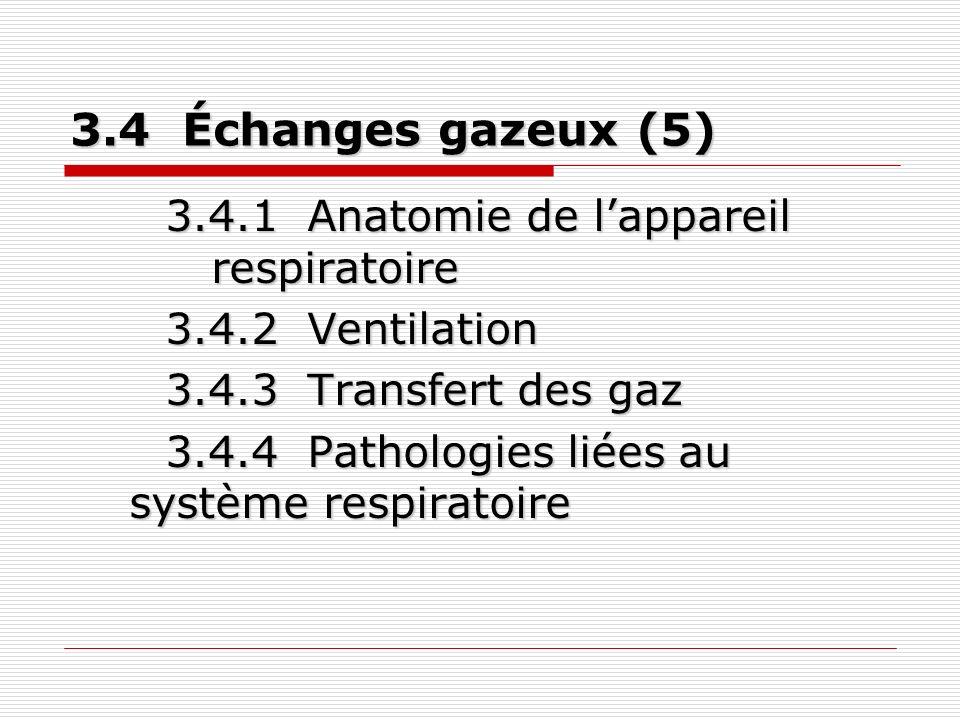 3.4 Échanges gazeux (5) 3.4.1 Anatomie de lappareil respiratoire 3.4.2 Ventilation 3.4.3 Transfert des gaz 3.4.4 Pathologies liées au système respiratoire