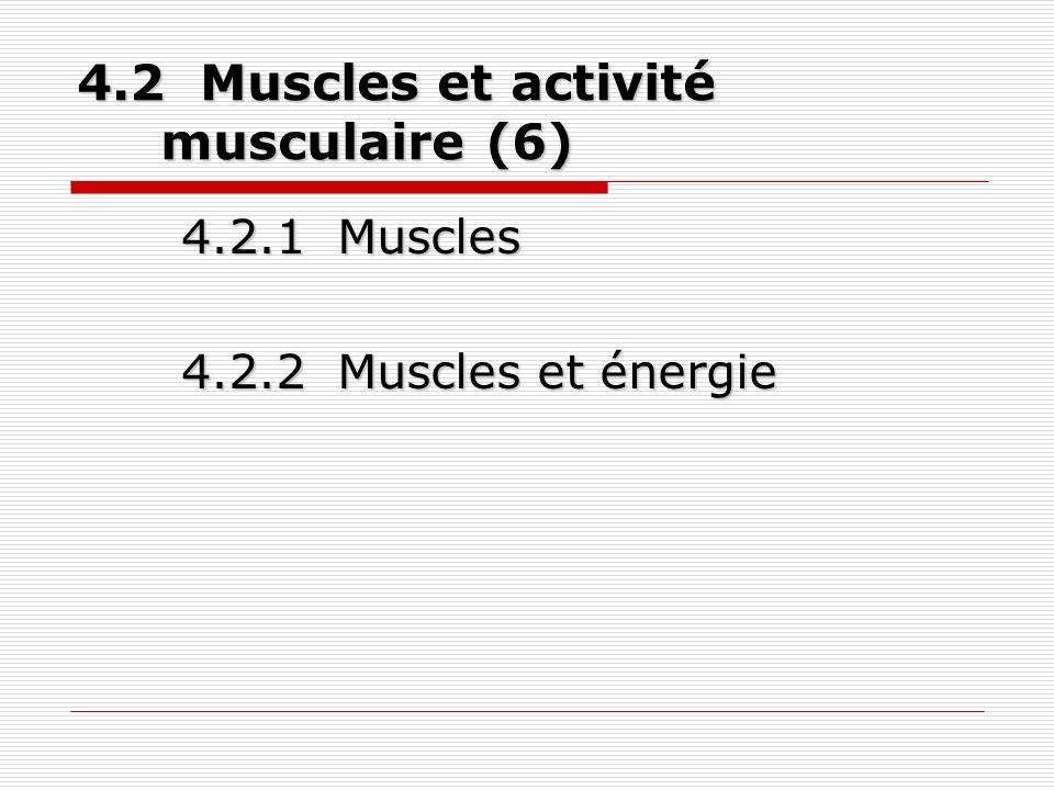 4.2 Muscles et activité musculaire (6) 4.2.1 Muscles 4.2.2 Muscles et énergie