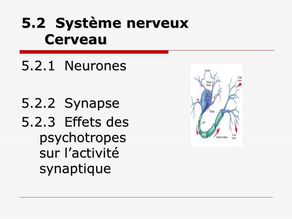 5.2 Système nerveux Cerveau 5.2.1 Neurones 5.2.2 Synapse 5.2.3 Effets des psychotropes sur lactivité synaptique