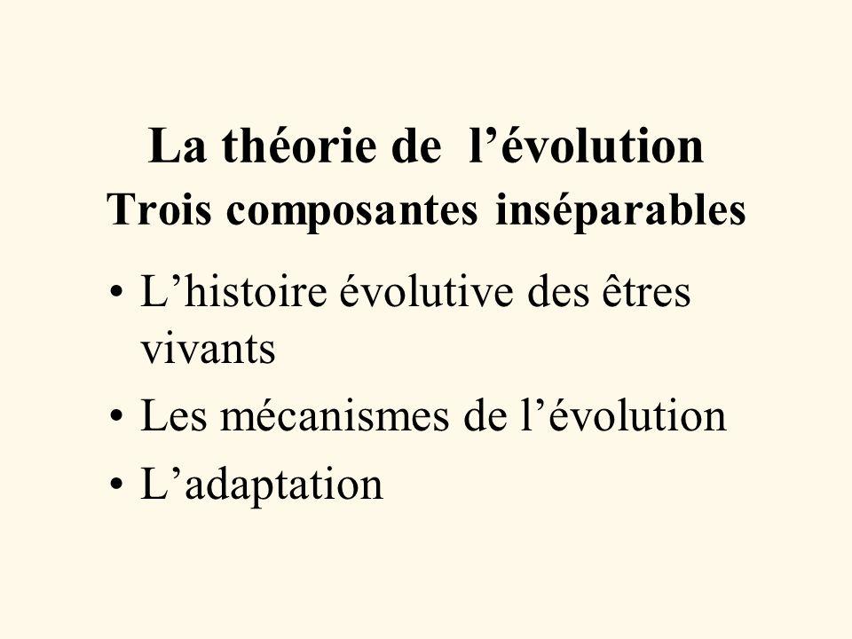 La théorie de lévolution Trois composantes inséparables Lhistoire évolutive des êtres vivants Les mécanismes de lévolution Ladaptation