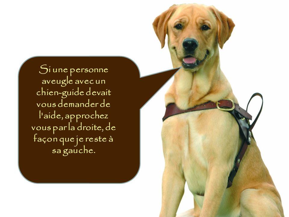 Si une personne aveugle avec un chien-guide devait vous demander de l'aide, approchez vous par la droite, de façon que je reste à sa gauche.