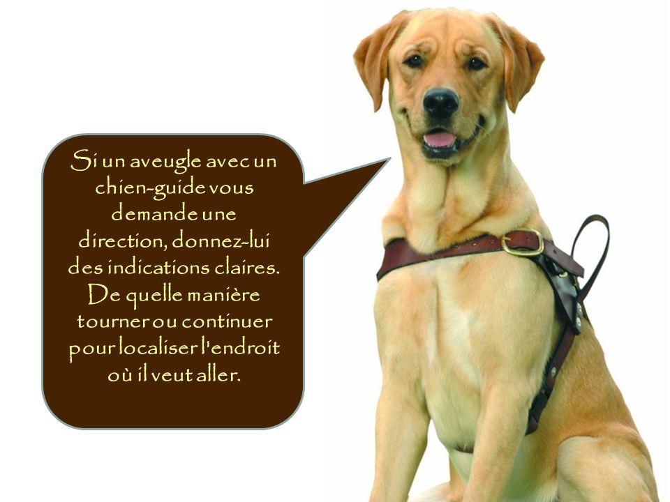 Si un aveugle avec un chien-guide vous demande une direction, donnez-lui des indications claires. De quelle manière tourner ou continuer pour localise