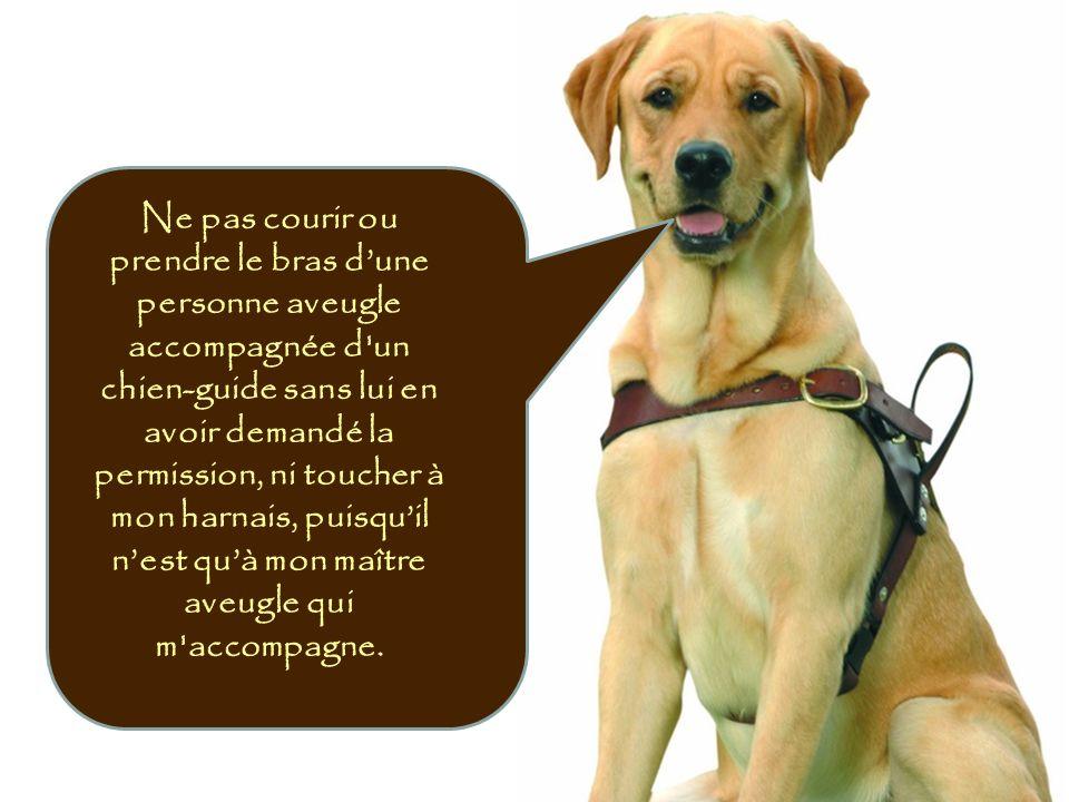 Ne pas courir ou prendre le bras dune personne aveugle accompagnée d'un chien-guide sans lui en avoir demandé la permission, ni toucher à mon harnais,
