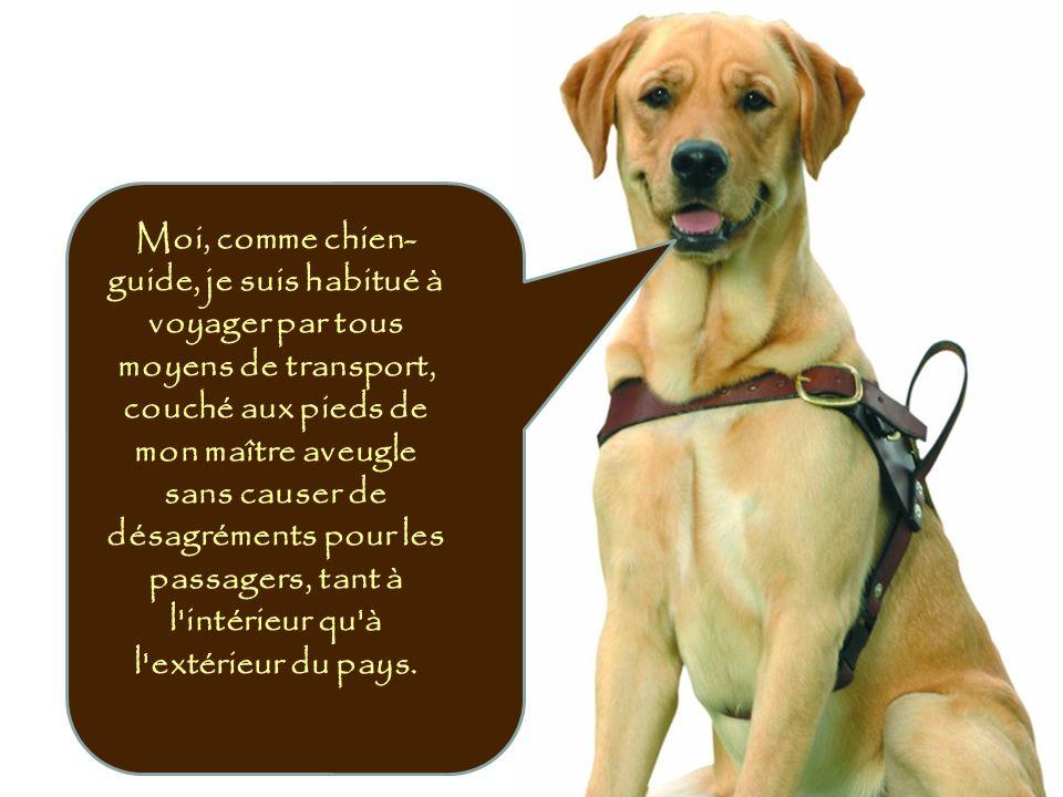 Moi, comme chien- guide, je suis habitué à voyager par tous moyens de transport, couché aux pieds de mon maître aveugle sans causer de désagréments po