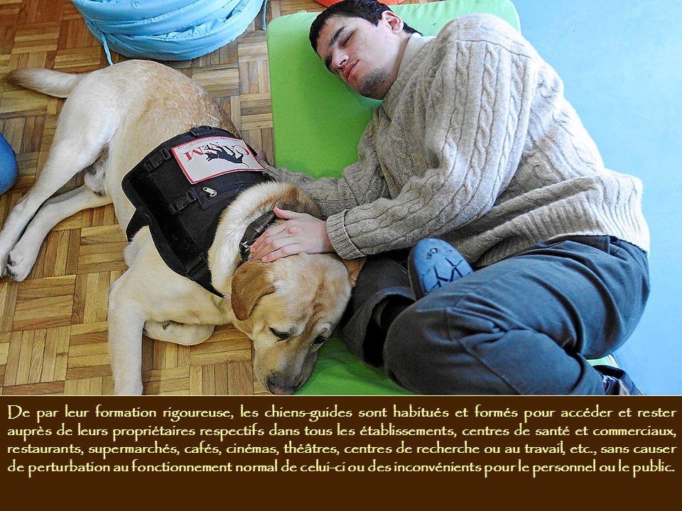 De par leur formation rigoureuse, les chiens-guides sont habitués et formés pour accéder et rester auprès de leurs propriétaires respectifs dans tous