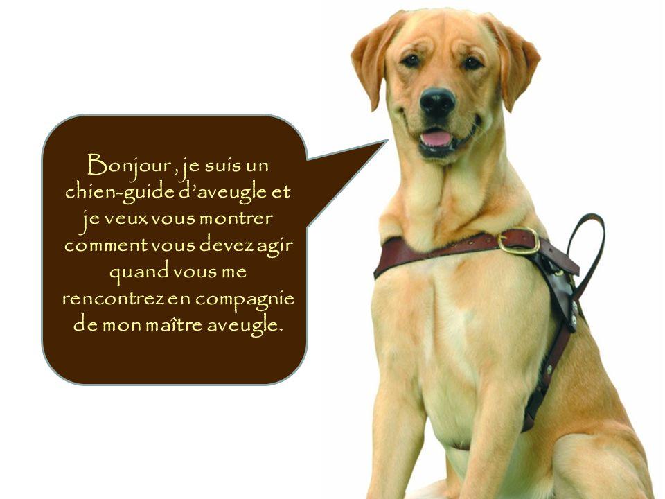 Bonjour, je suis un chien-guide daveugle et je veux vous montrer comment vous devez agir quand vous me rencontrez en compagnie de mon maître aveugle.