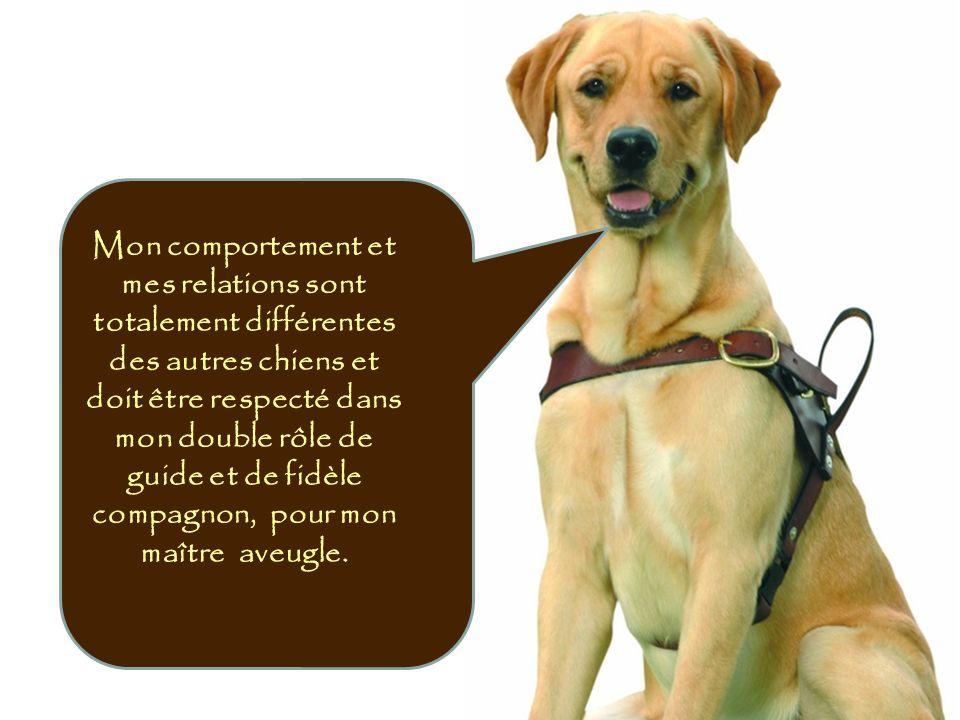 Mon comportement et mes relations sont totalement différentes des autres chiens et doit être respecté dans mon double rôle de guide et de fidèle compa