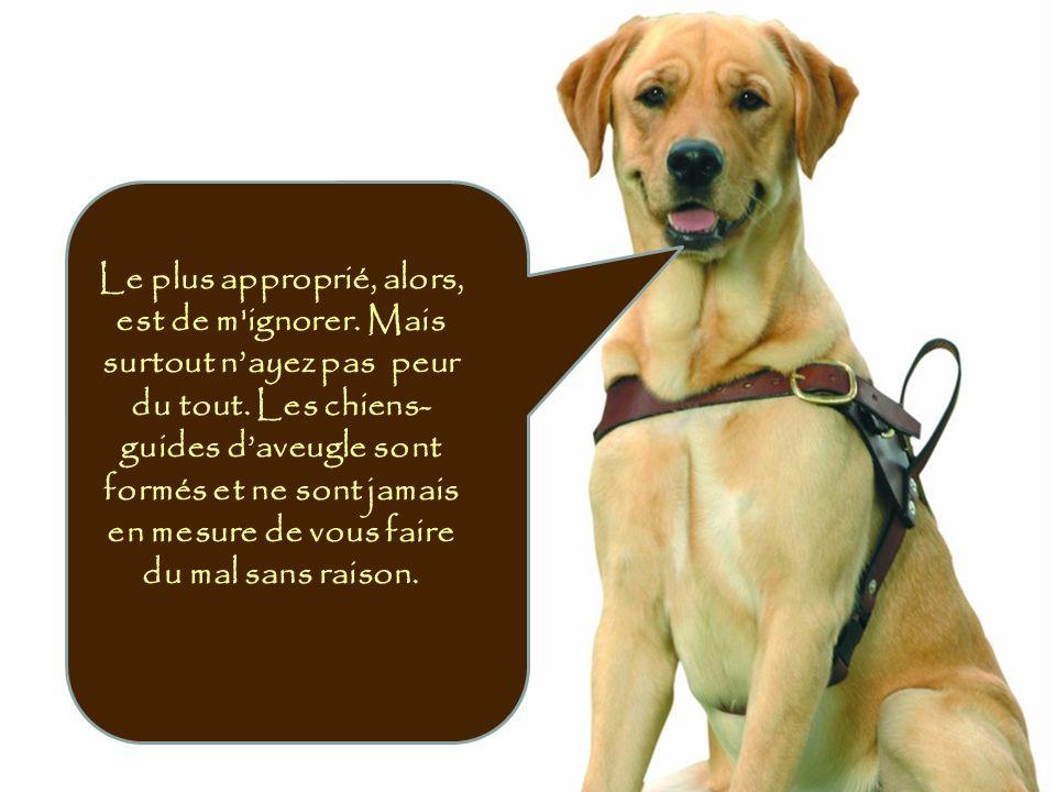 En milieu de travail, les utilisateurs des chiens-guides sont formés pour exercer leurs fonctions avec eux à leurs côtés.