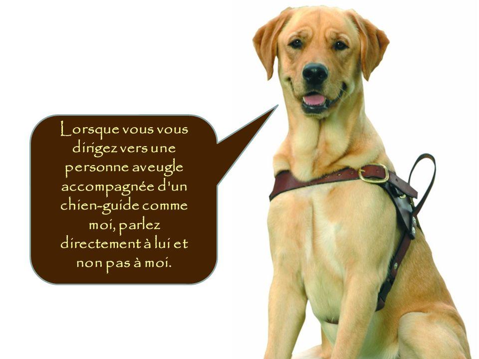 Lorsque vous vous dirigez vers une personne aveugle accompagnée d'un chien-guide comme moi, parlez directement à lui et non pas à moi.