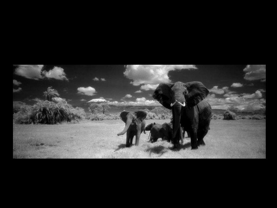 Martyn Colbeck est avant tout un cinéaste de la faune et cinéaste, mais il est aussi un photographe de plateau de renommée mondiale.