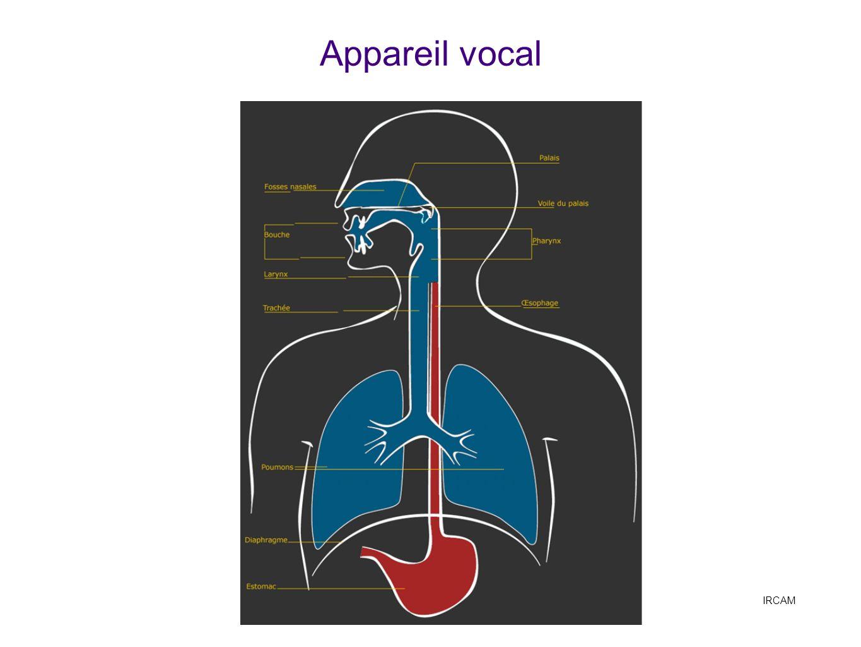 Appareil vocal IRCAM Anatomie générale, voir IRCAM http://mediatheque.ircam.fr/sites/voix/decrire/appareil.html