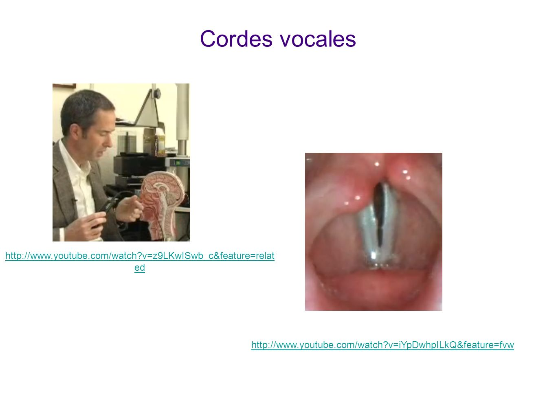 Cordes vocales Voir animations sur youtube ! La première montre comment et où est enfilé lendoscope. La deuxième montre les vibrations des cordes pend