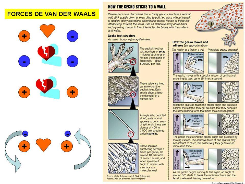 FORCES DE VAN DER WAALS +- -- ++ + - + -