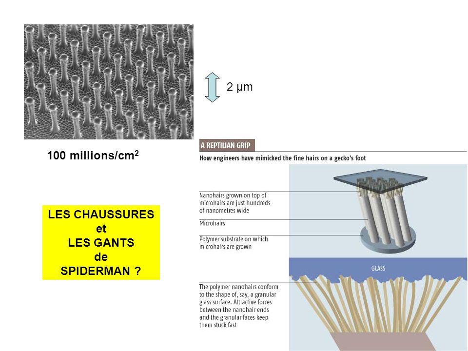 2 µm 100 millions/cm 2 LES CHAUSSURES et LES GANTS de SPIDERMAN ?