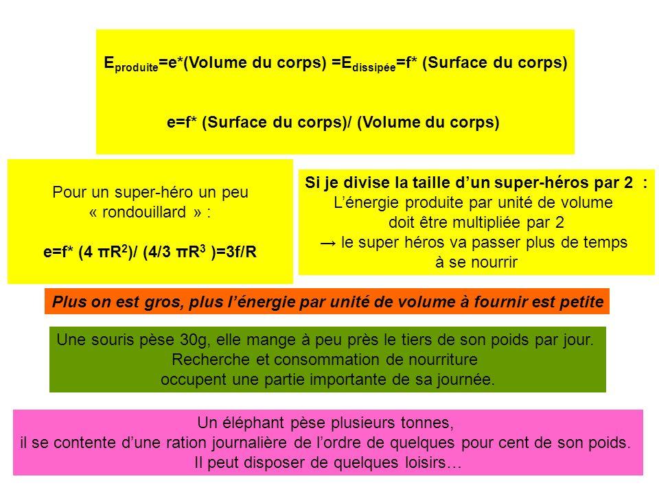 E produite =e*(Volume du corps) =E dissipée =f* (Surface du corps) e=f* (Surface du corps)/ (Volume du corps) Pour un super-héro un peu « rondouillard