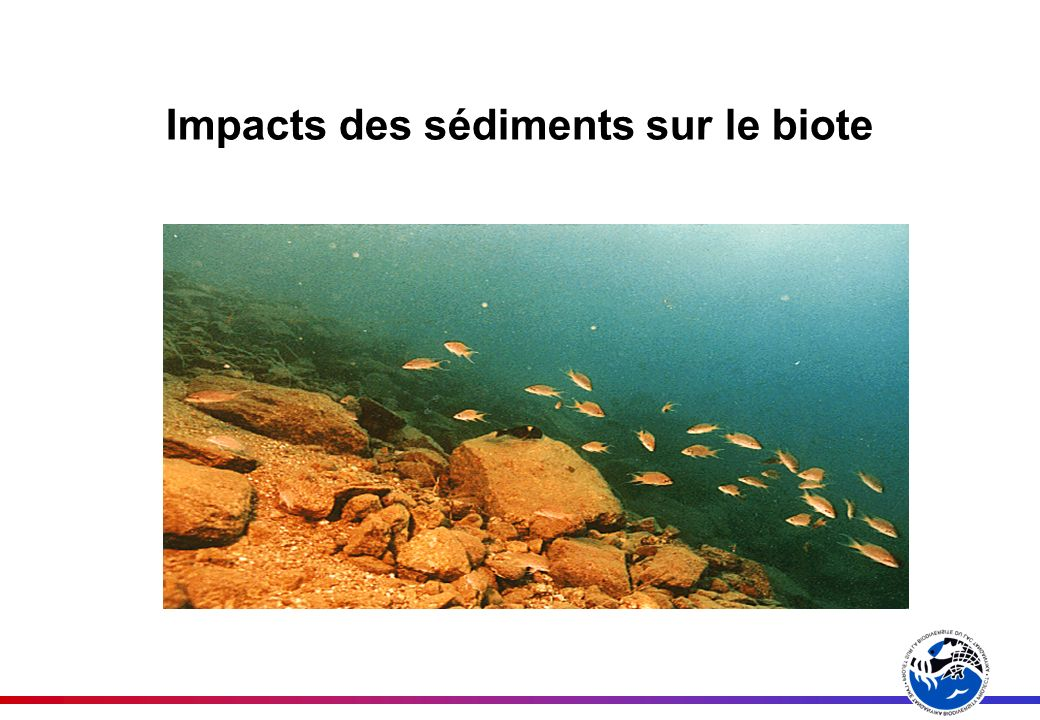 Impacts des sédiments sur le biote