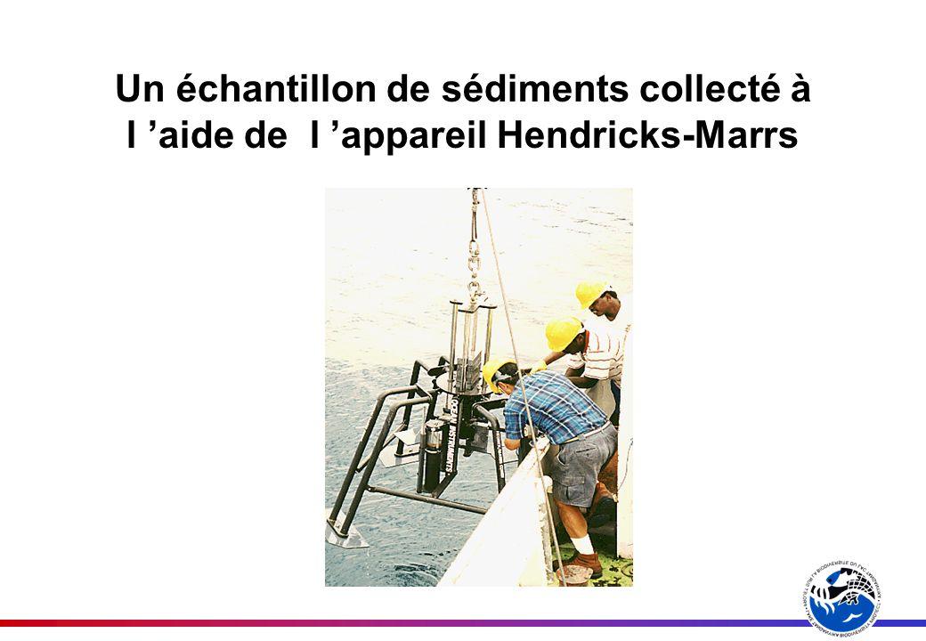 Un échantillon de sédiments collecté à l aide de l appareil Hendricks-Marrs