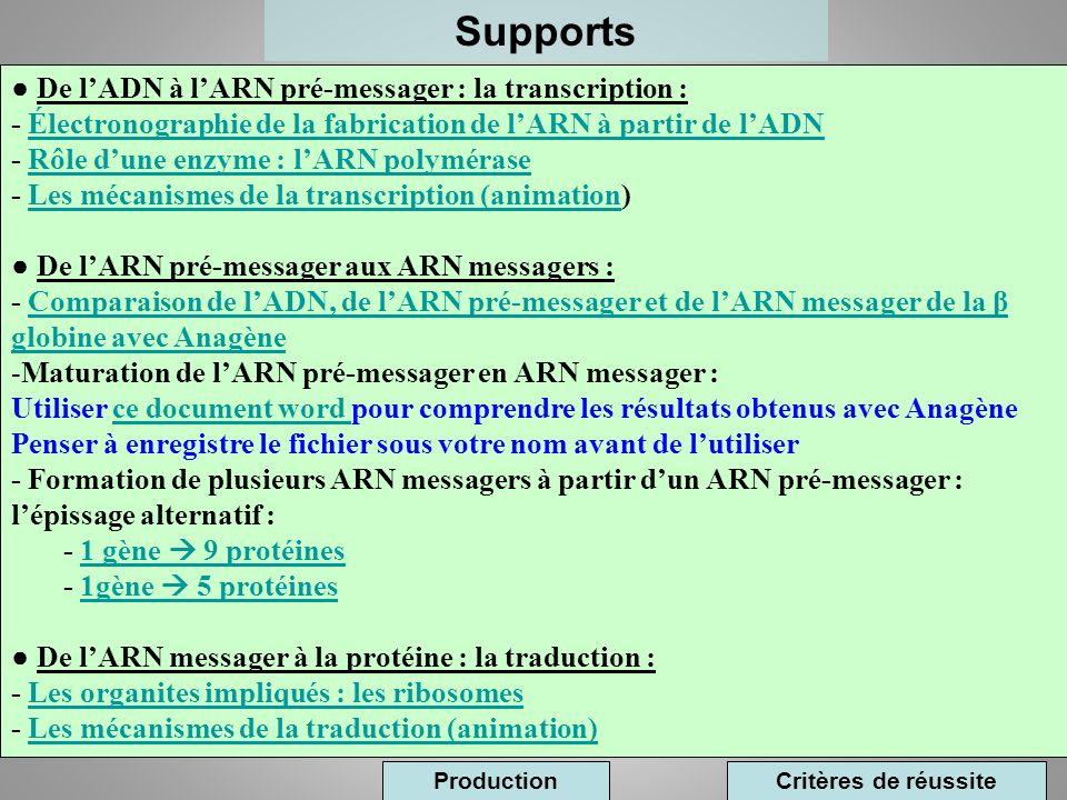 Supports De lADN à lARN pré-messager : la transcription : - Électronographie de la fabrication de lARN à partir de lADNÉlectronographie de la fabricat