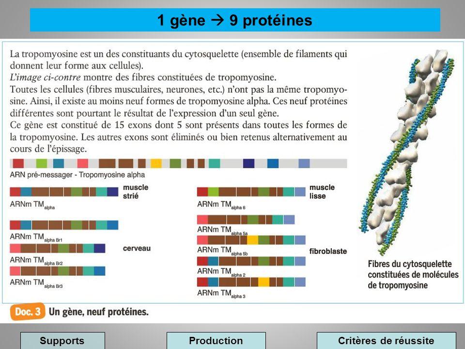 1 gène 9 protéines Supports ProductionCritères de réussite