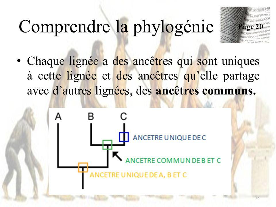 Chaque lignée a des ancêtres qui sont uniques à cette lignée et des ancêtres quelle partage avec dautres lignées, des ancêtres communs.